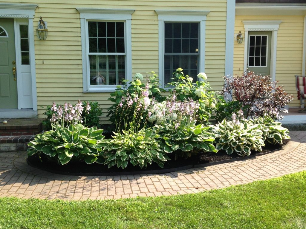Spring Planting In Maine 11 Plants That Add Life And