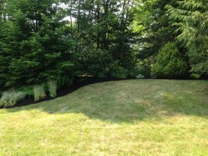 Photo of mowed lawn at the forest edge