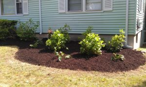 photo of dry mulched plants
