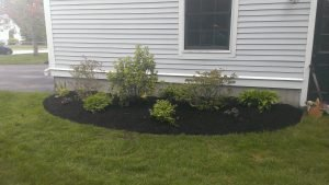 photo of mulched and cut lawn during rainy day different angle