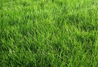 Photo of grass