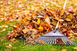 photo of fall leaves and rake