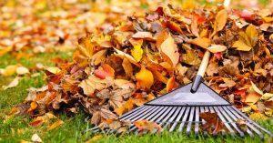 photo of fall leaves and a rake