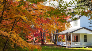 BRIGHTEN UP YOUR LANDSCAPE WITH AUTUMNAL FOLIAGE